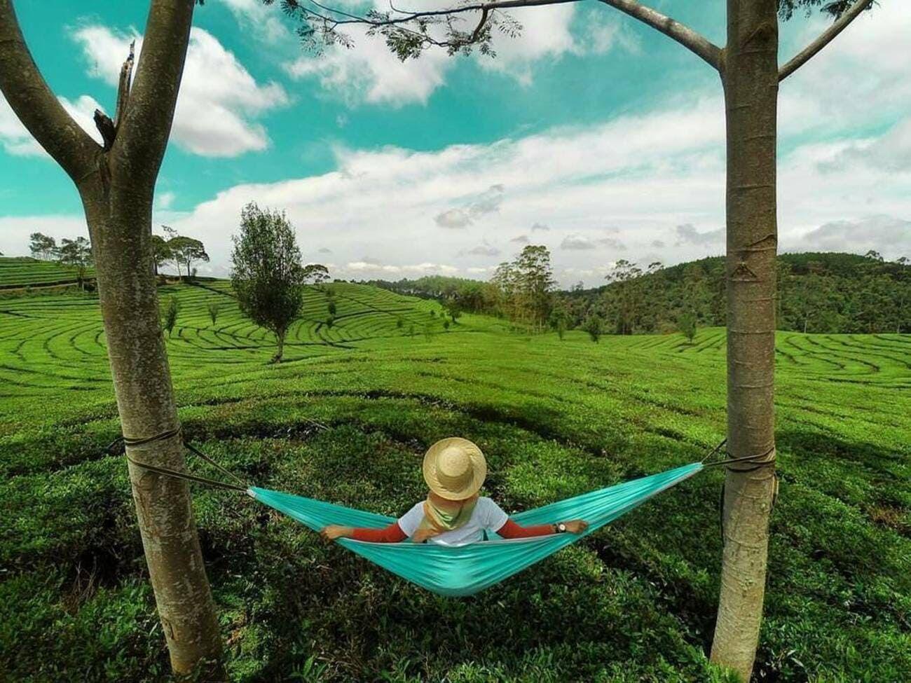 Kebun Teh Sukawana Lembang Bandung