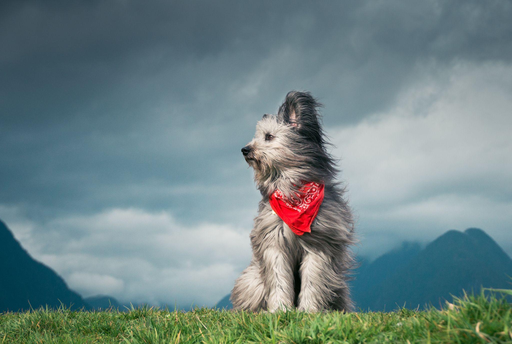 Rasa: mix jazvečík Hľadáme milujúci domov pre roztomilé šteniatko nájdené na ulici.