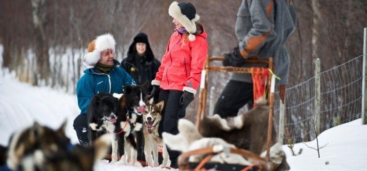 Trineo con perros huskies en laponia