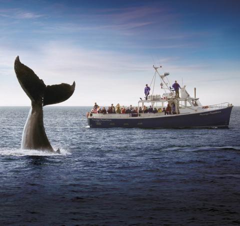 Halifax, Nova Scotia is known for its beautiful North Atlantic ...