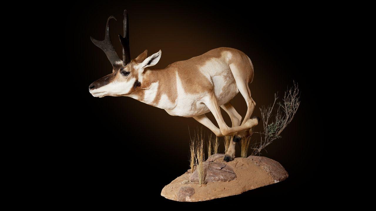 North American – Wildlife Revolutions