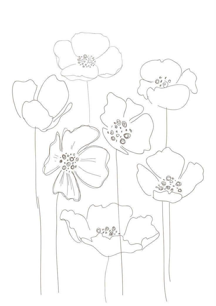 notitle  floral drawing flower drawing poppy drawing