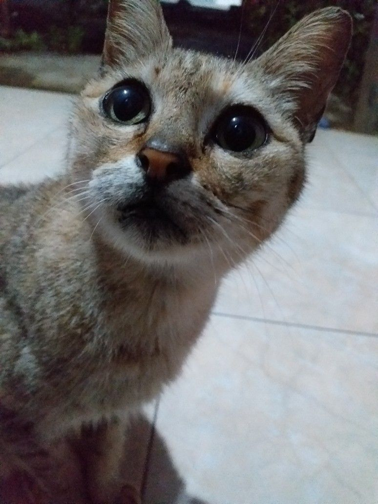 Kucing Kampung Cute Cat Kucing Lucu Kucing Lucu
