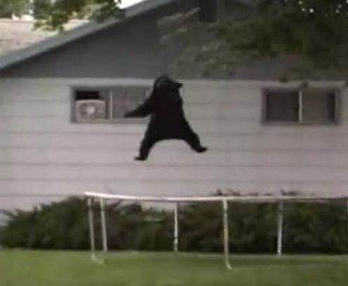 The Famous Trampoline Bear Incident Happened 10 Years Ago Today In Missoula Missoula Montana Big Sky Country