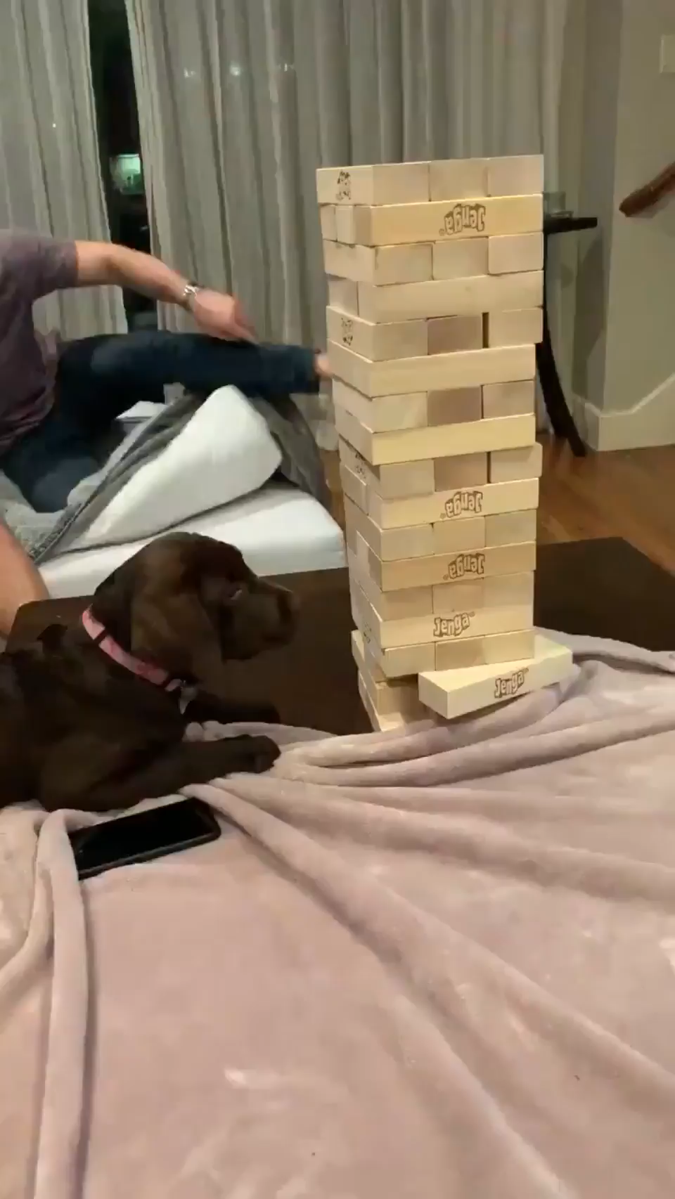 This is Remy. She's a jenga legend.
