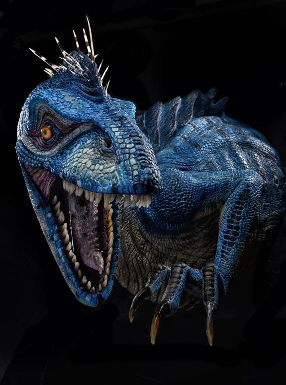 the blue raptor by trent taft swsca contest winners pinterest