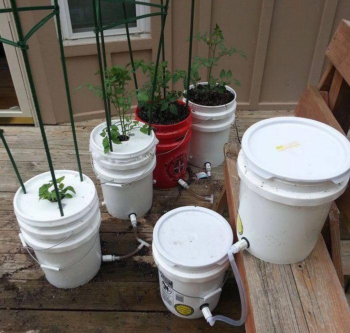5 Gallon Self Watering Tomato Container Organic GardeningVe able