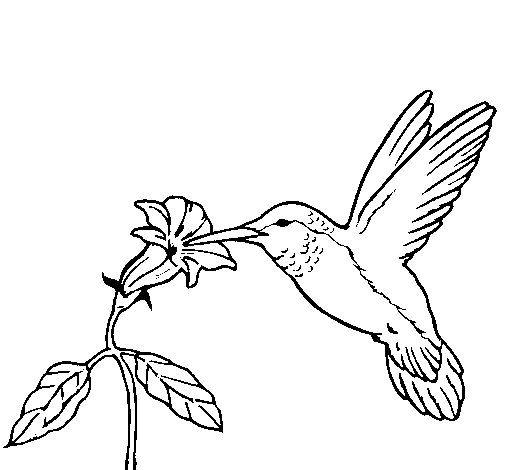 Dibujo de Colibrí y una flor para Colorear - Dibujos.net | dibujos ...