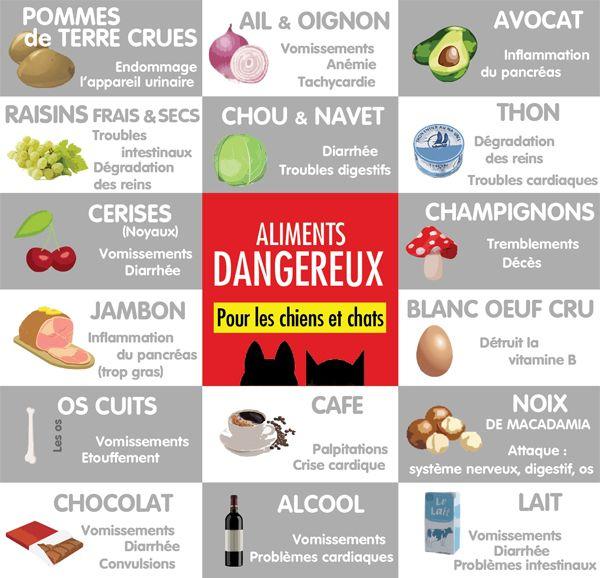 Bevorzugt Aliments dangereux chiens et chats Plus | animaux | Pinterest  EZ75