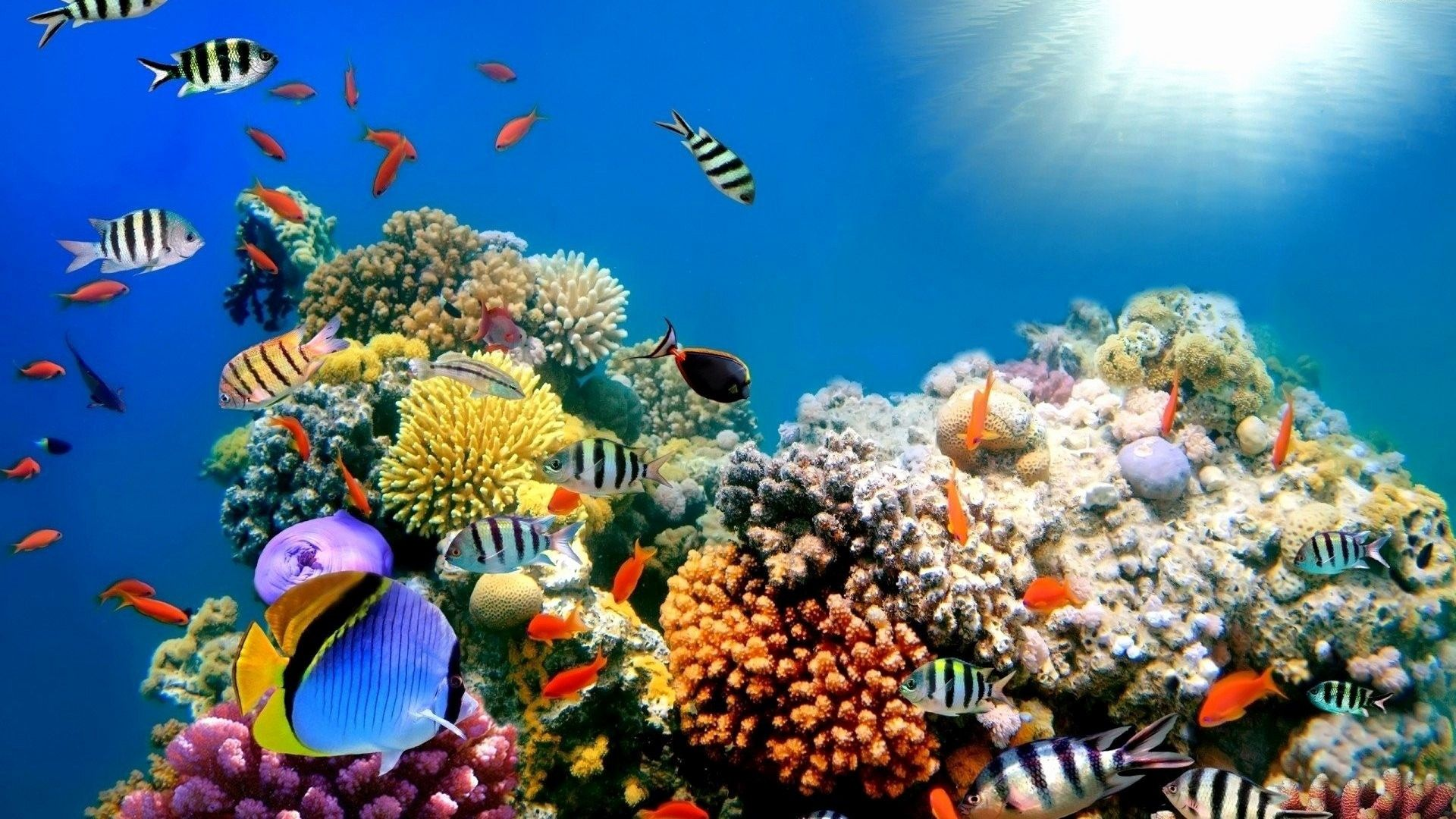 Tropical Fish Wallpapers 07 Top Free Tropical Fish Hd Backgrounds For Android On In 2020 Great Barrier Reef Underwater Coral Reef