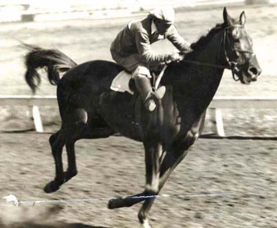Facts About Seabiscuit Race Horse | SEABISCUIT20 seabiscuit IN A ...