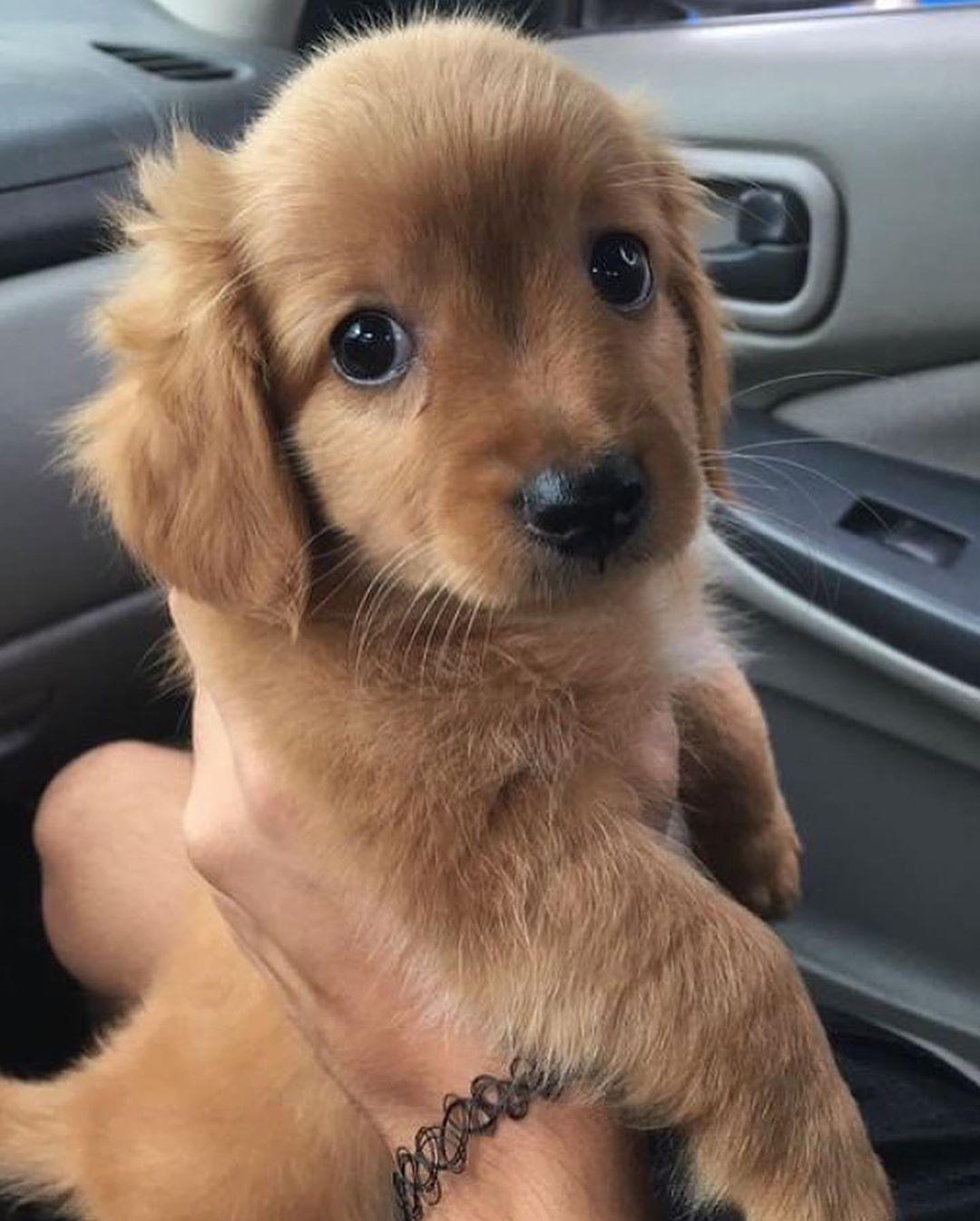 Epingle Par Bilal Sur Dogs N Pups Dressage Chien Chien A Donner Chien Mignon