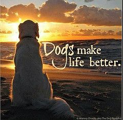 Dogs make life better.