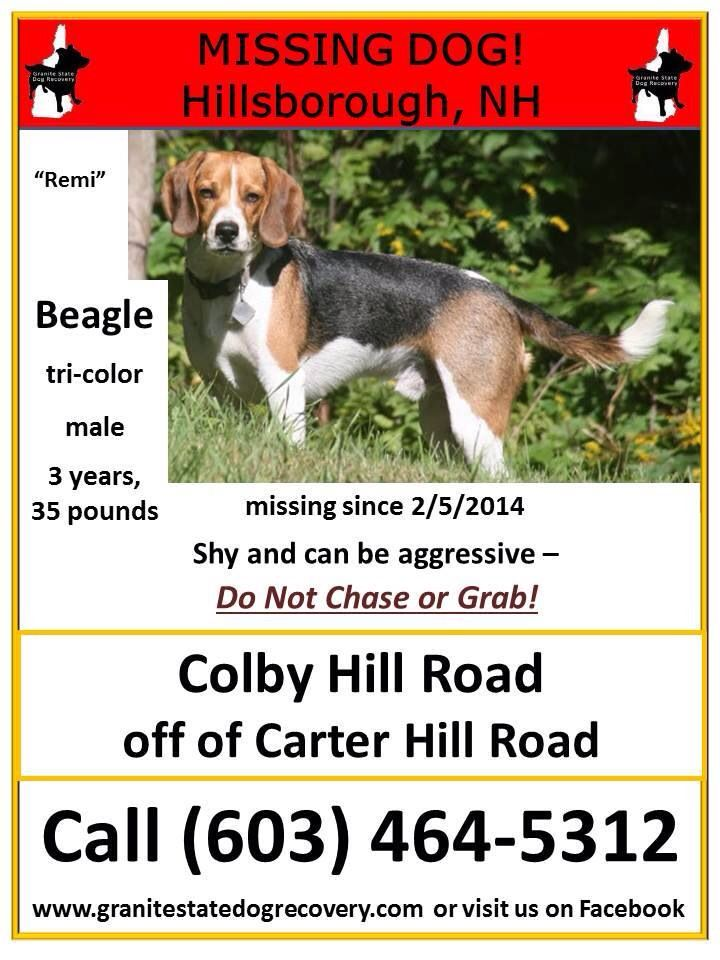 Pin By Us Lost Dog Registry On Beagles Us Lost Dog Registry