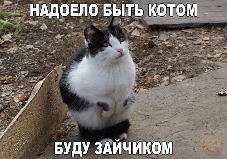 Realno Smeshnye Kartinki S Nadpisyami Dlya Podnyatiya Nastroeniya