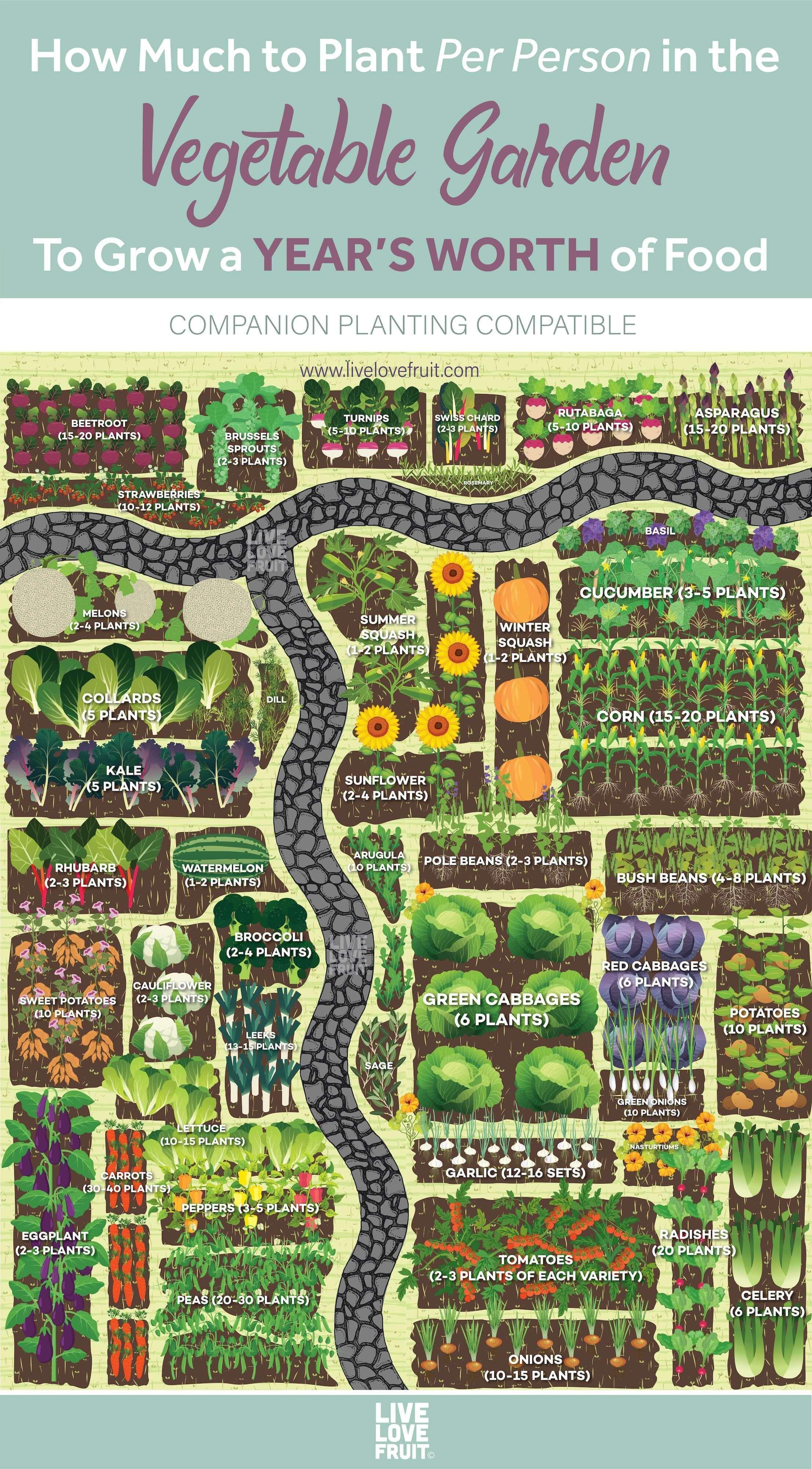 Photo of Wie viel pro Person im Gemüsegarten für ein Jahr Nahrung gepflanzt werden muss