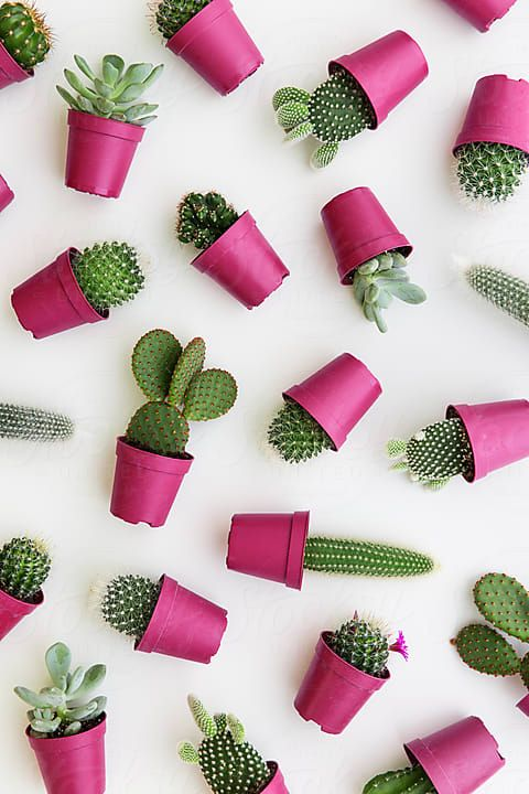 Cactus background by Ruth Black for Stocksy United