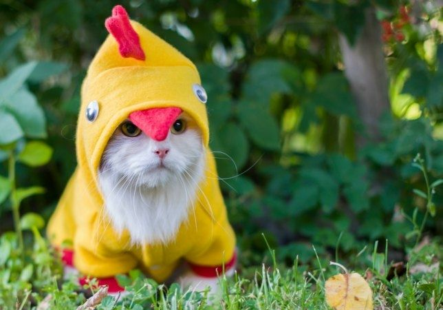 105 Cats in Halloween Costumes. This is so adorable. #Cats #Halloween #CatCostumes