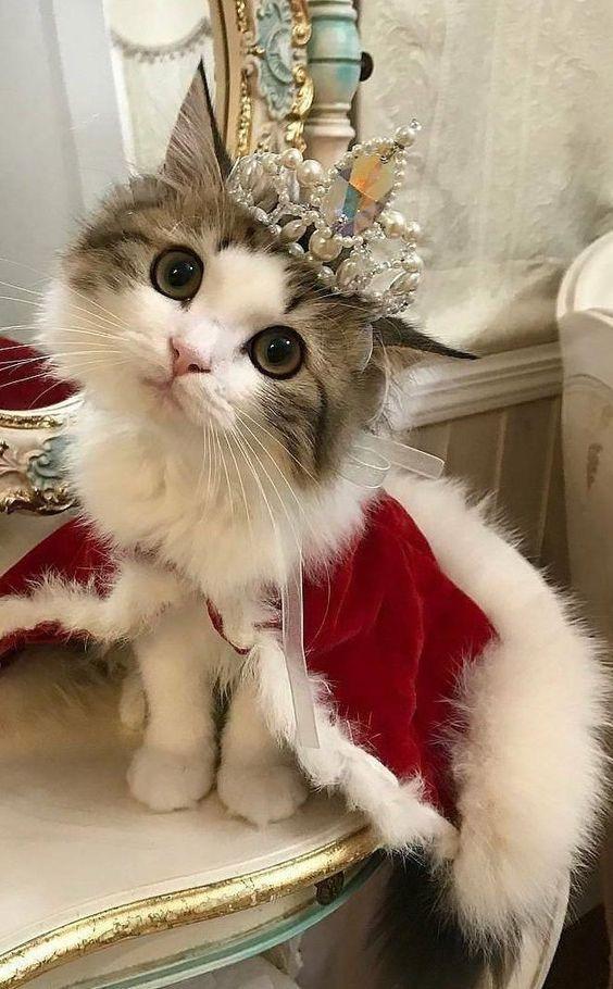 International Cat Day 6 Best Ways To Celebrate Cute Little
