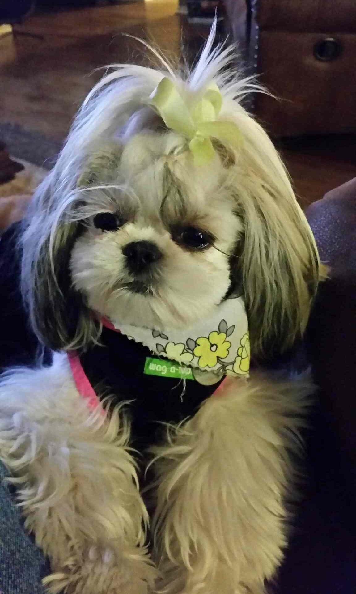 Trixie Dixie