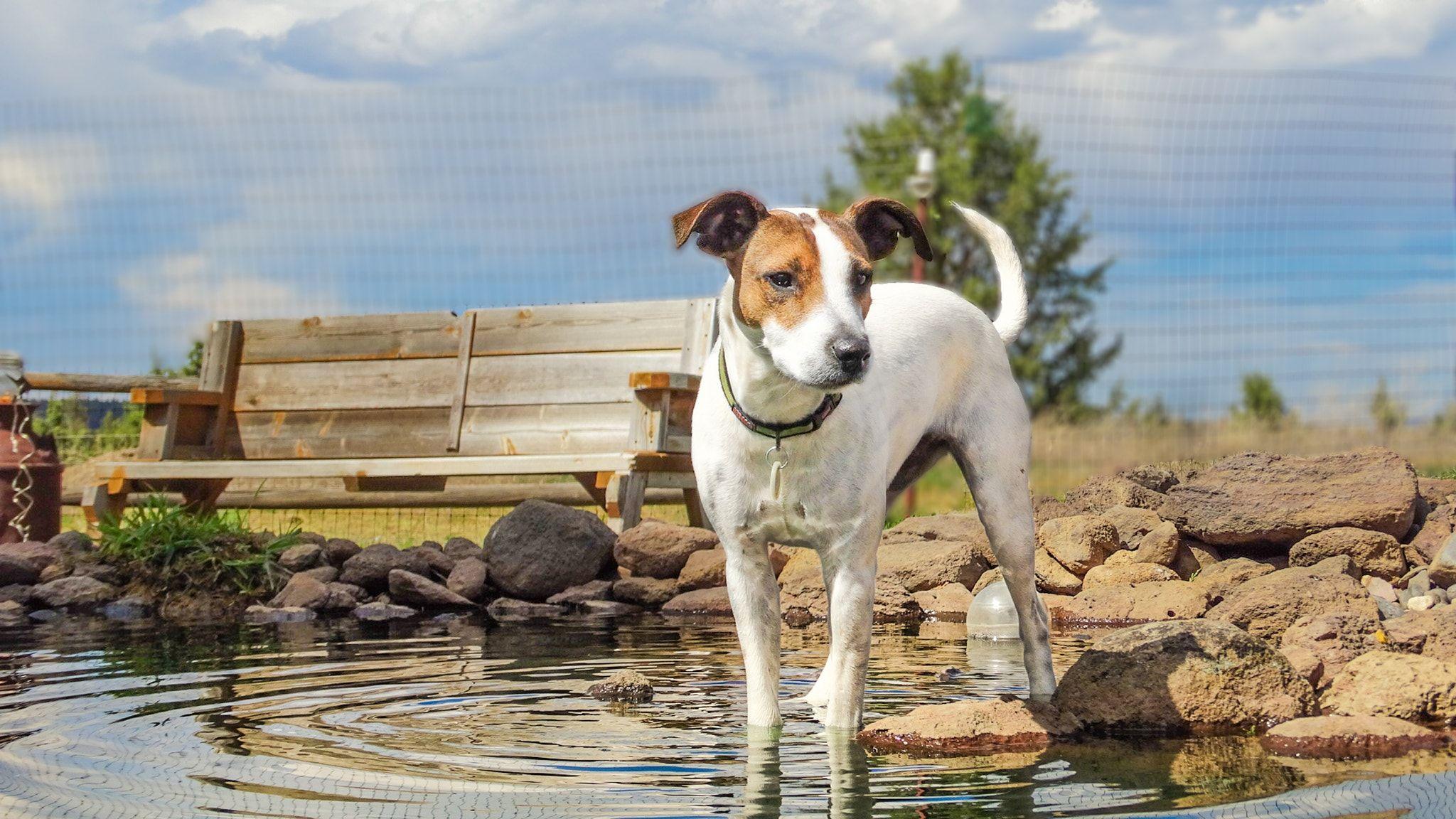 Oregon live puppies corgi