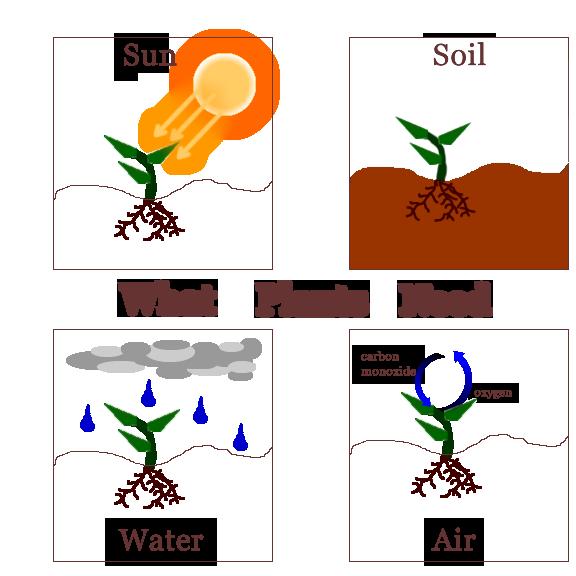 plant art science plant art science for kids plants. Black Bedroom Furniture Sets. Home Design Ideas