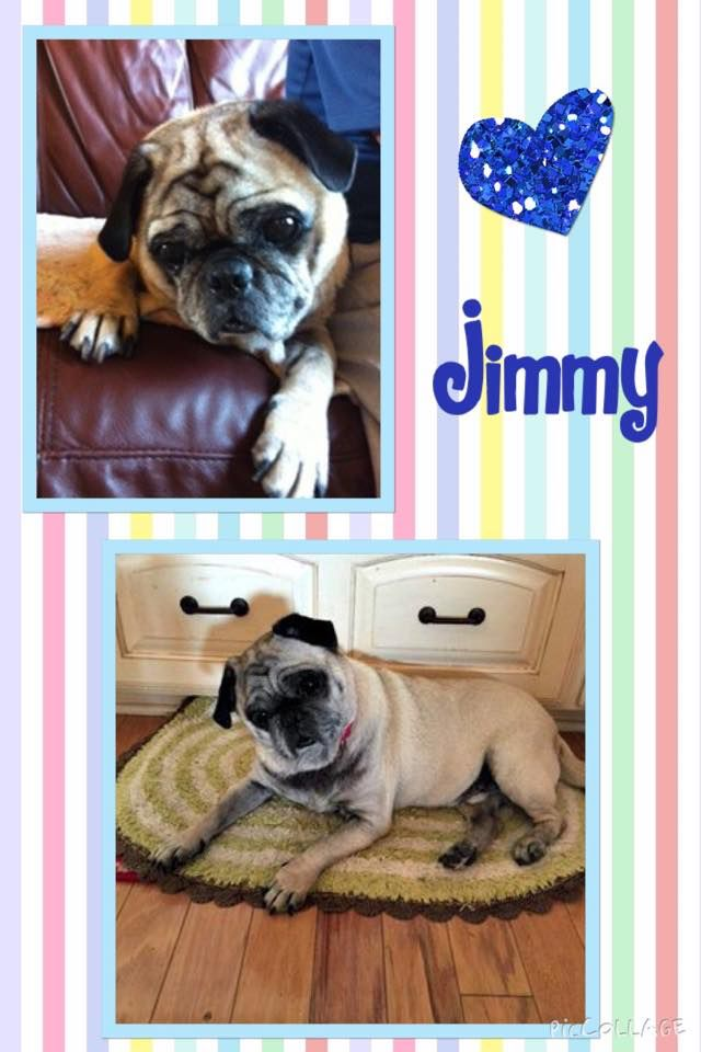Hi All My Name Is Jimmy I Am A Six Year Old Lovable Pug Boy My
