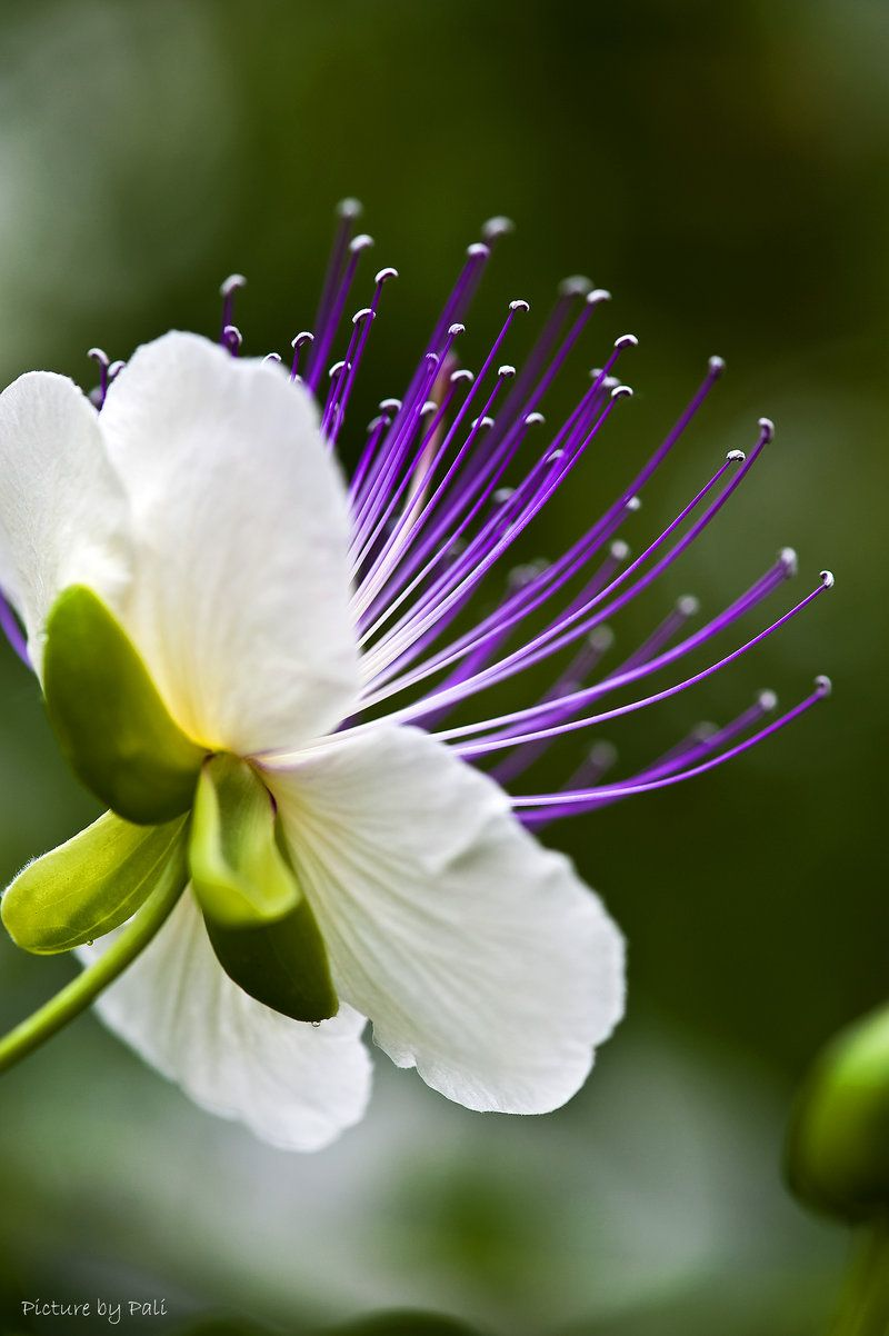Flower by picturebypali flores pinterest flowers flower and