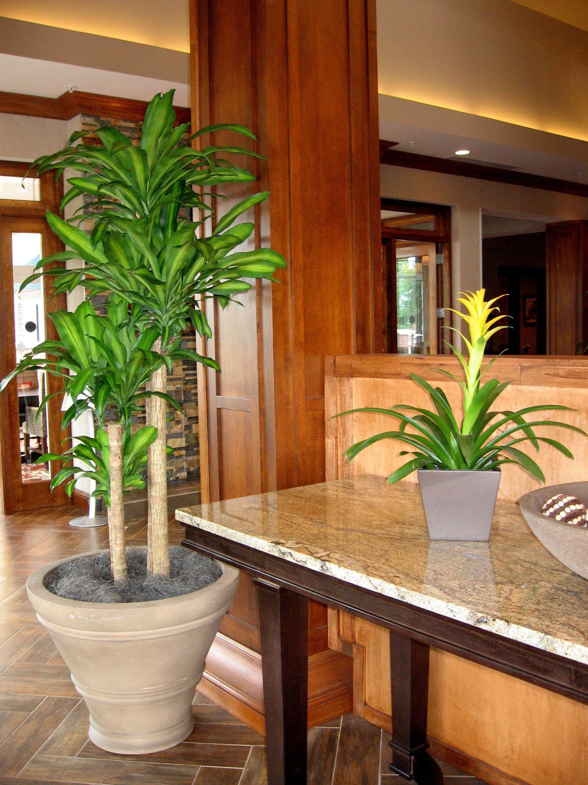 In the lobby at the Hilton Garden Inn. | Capital InteriorScapes ...