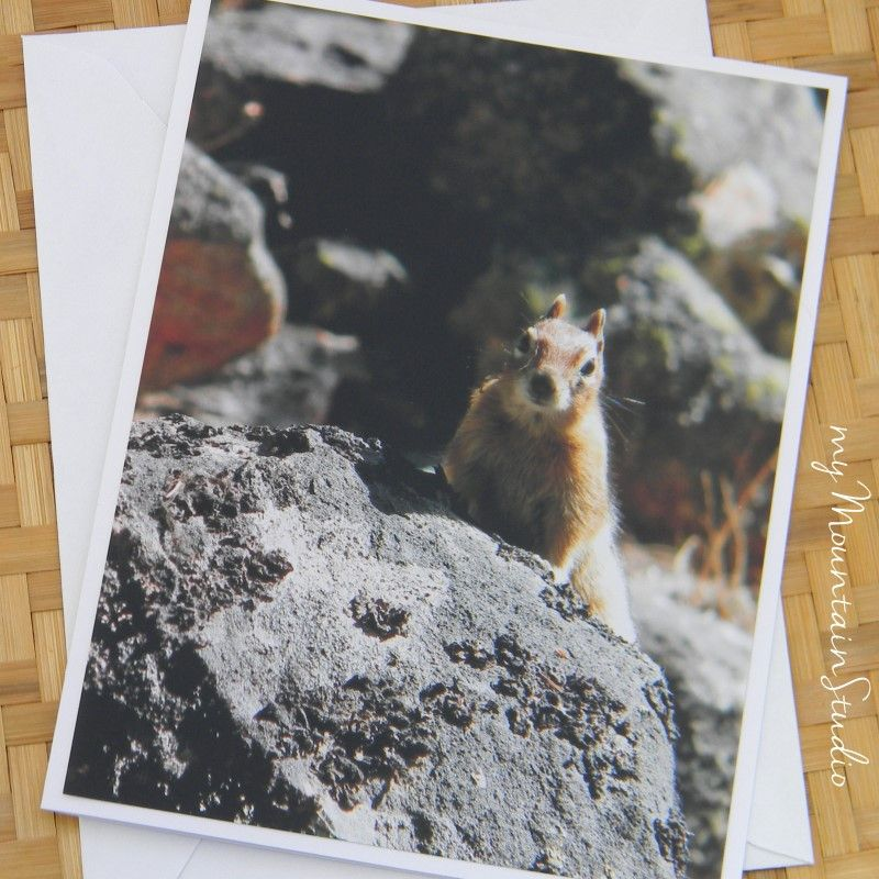 Chipmunk Poses for Portrait Photo Note Card - Wildlife Nature Photography Montana - myMountainStudio