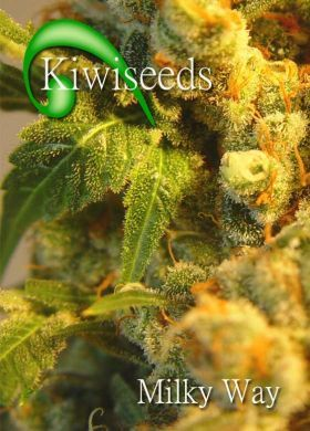 Feminized Milky Way From Kiwi Seeds strain review