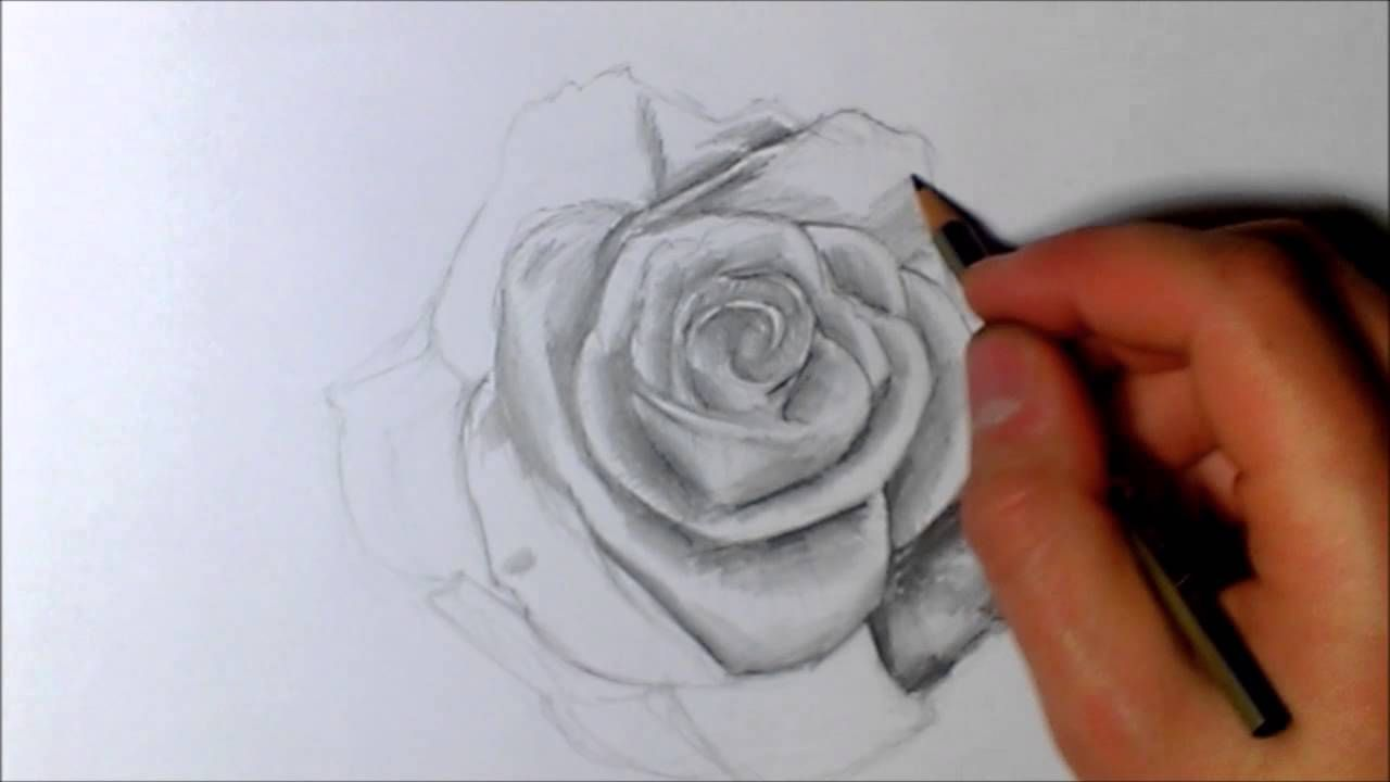 Jak Narysowac Roze Rose Speed Drawing Rose Drawings Tattoos
