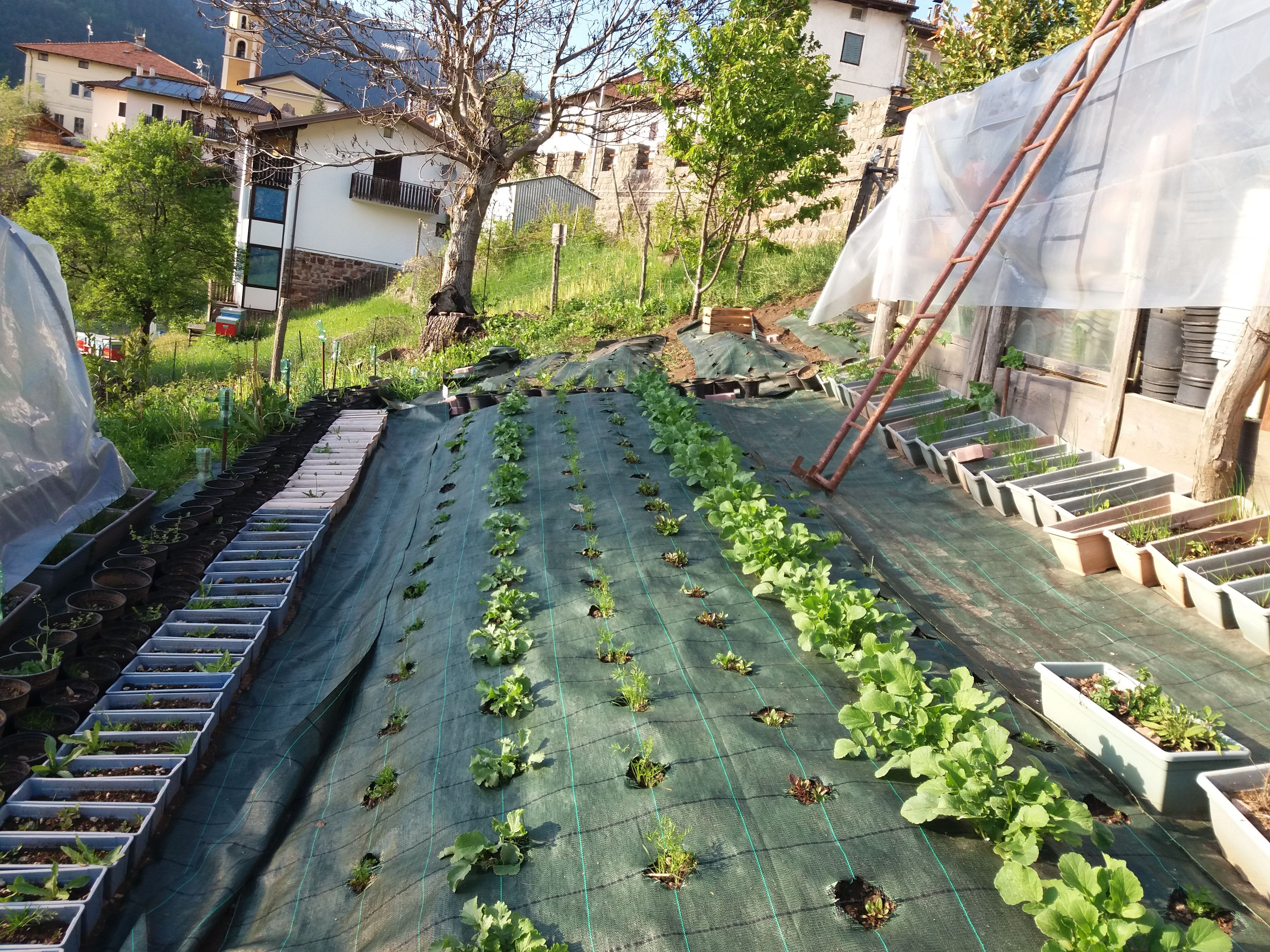 Spring 2017 Believe In Your Dreams Gladys Sustainable Vegetables ...