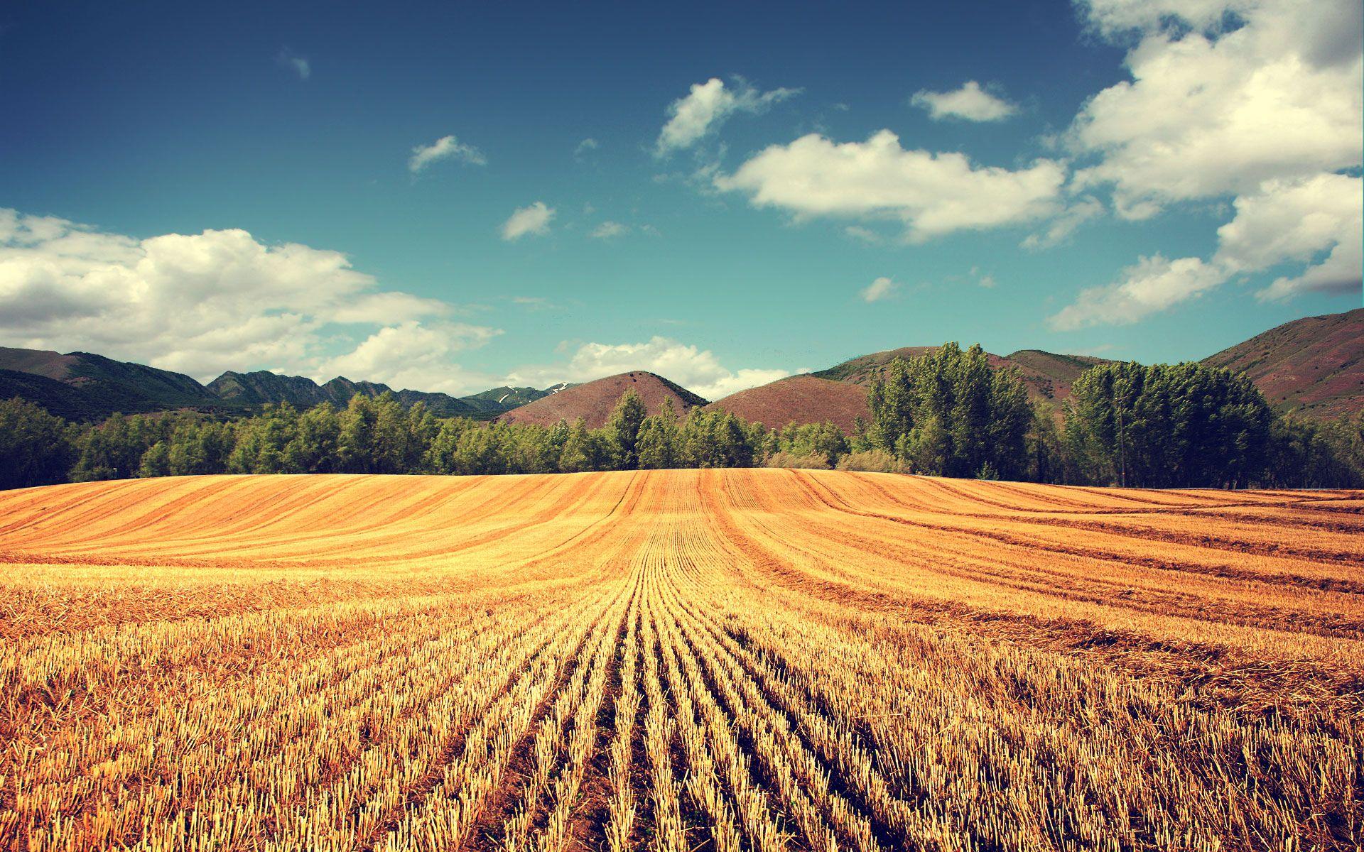 Pin By Thaddeus Jackson On Farms Field Wallpaper Landscape