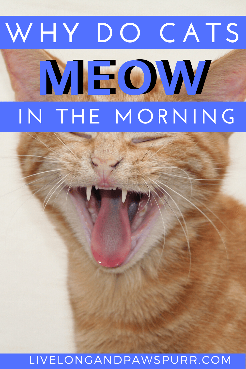 Why Does My Cat Meow In The Morning Live Long And Pawspurr In 2020 Kitten Meowing Cat Training Cat Training Kittens