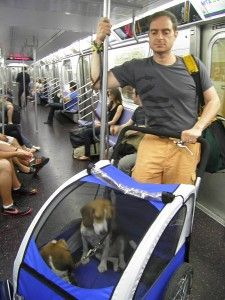 How to take your dog on the nyc subway Nyc subway, Dogs