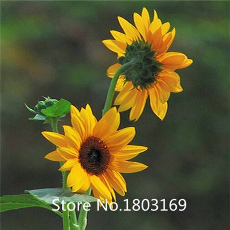 100pcs/lot Mini Artificial Sunflowers Decoration Wedding Bouquets Scrapbooking Accessories Garde