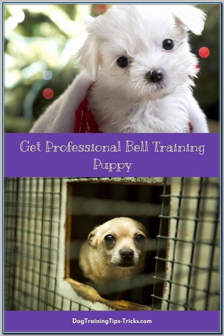Ways To Use Bell Training For Puppies Dog Training Puppies