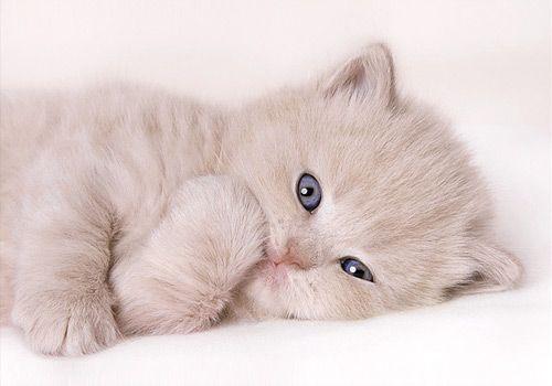 Pin By Denisa Vitan On Cats Kittens Kittens Cutest Cats