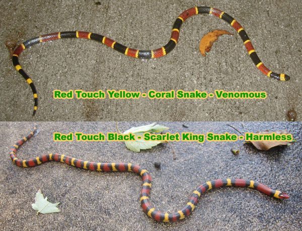 Rhyme For Coral Snakes Colors To Tell If A Snake Is Poisonous Red Yellow Black Poem Survival Life Hacks Survival Life Survival Tips
