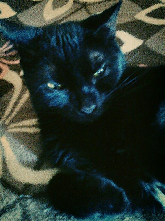 my black cat Star striking one of many poses :-)
