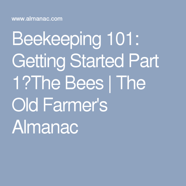 Beekeeping 101: Getting Started Part 1�The Bees | The Old Farmer's Almanac
