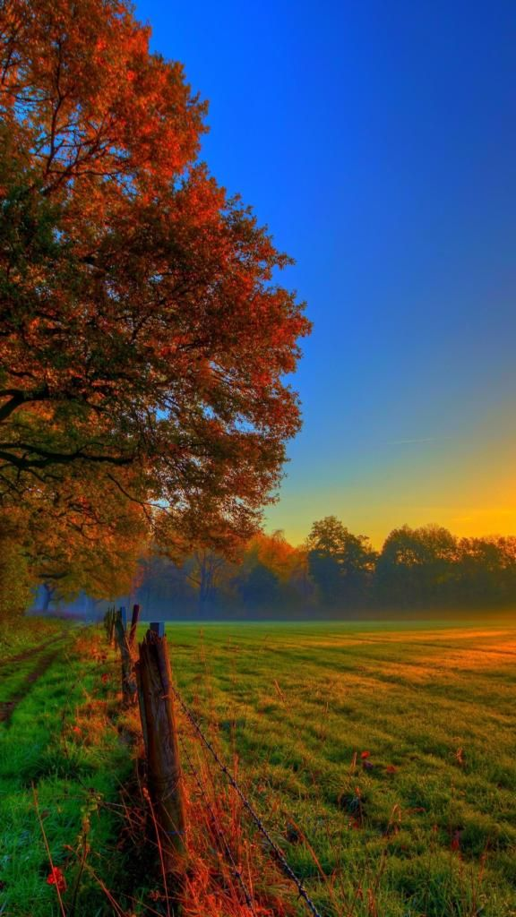 Best iPhone Wallpapers 4k nature autumn field green