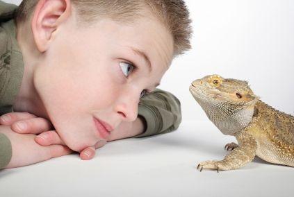 Reptiles Pets uk Reptiles For Kids Pets