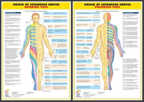 Nervous System Charts  Set Of   Anatomy  Medical Charts