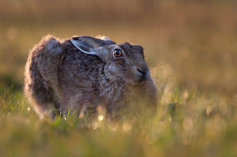 Paul Hewitt saisit avec une grande intensité la faune et la flore. Découvrez son travail d'une rare intensité : www.paulhewittphotography.co.uk/Animals #photographie
