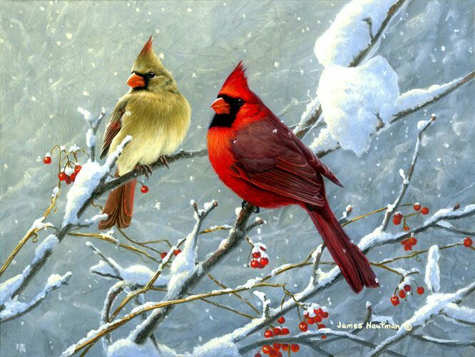 Mr and Mrs Cardinal in the snow bird | Art | Painting ...