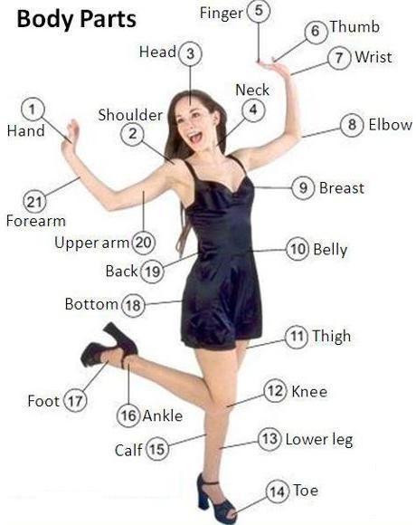 Körperteile auf englisch