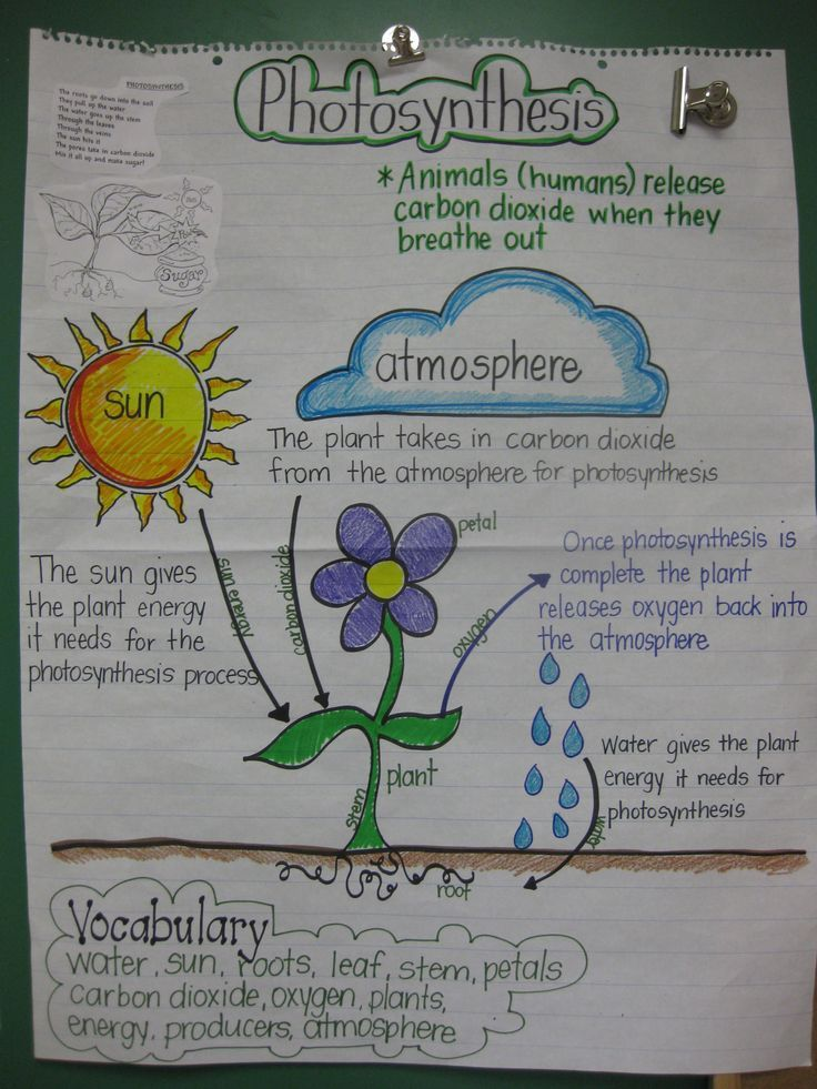 photosynthesis anchor chart image Google Search Cycles