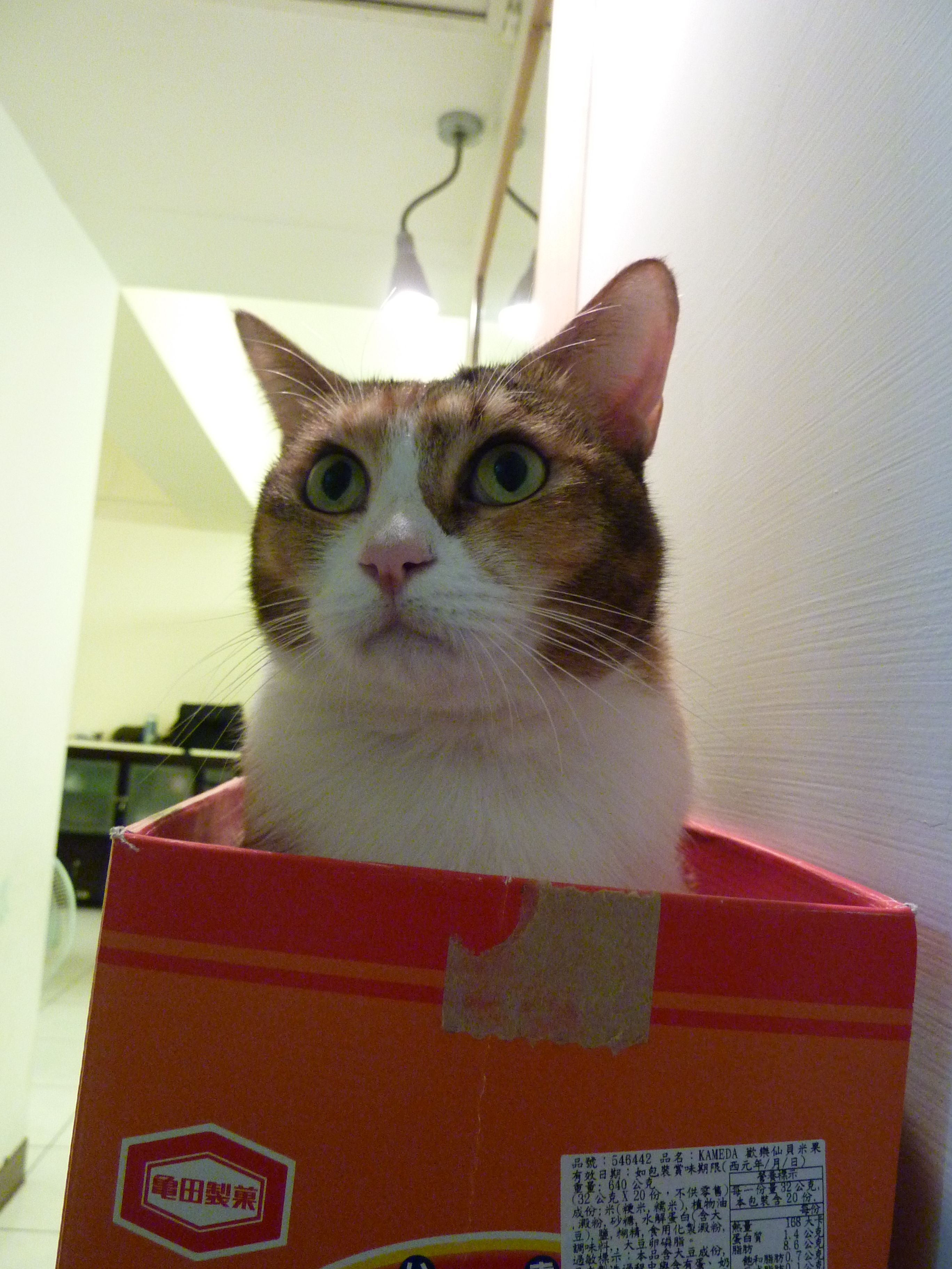 Exactly why cats love boxes so much